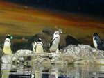 penguin 035.jpg